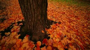 stock-footage-tree-trunk-and-fall-leaves-falling-on-the-ground